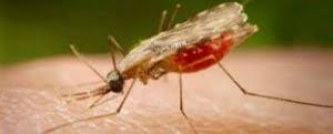 En 271,8% aumentaron los casos de malaria en Bolívar en 18 semanas
